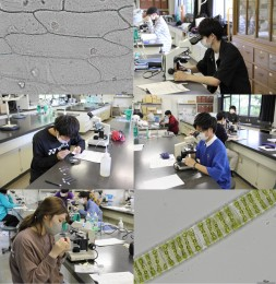 生物学実験