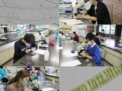 教職課程関連の実験を開始